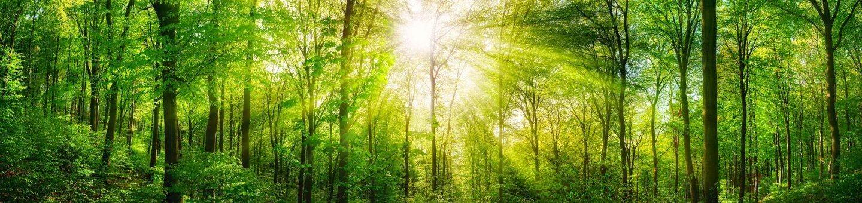 Sustainability & Energy Saving Measures and Advice